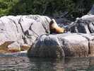 sea lions deserters group north island vancouver island